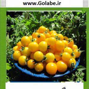بذر گوجه چری