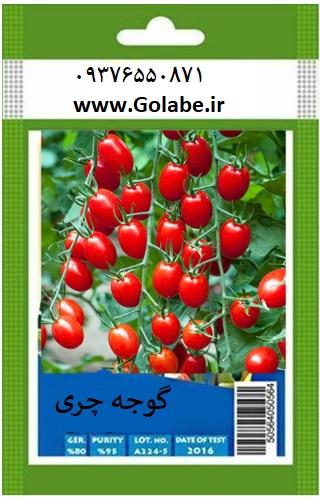 قیمت بذر گوجه چری