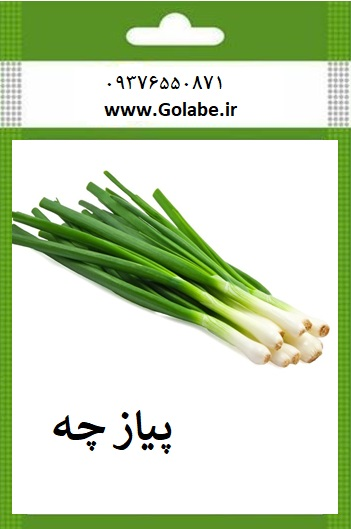 بذر پیازچه