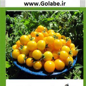 گوجه گیلاسی