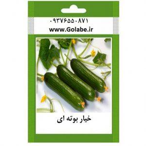 قیمت بذر خیار