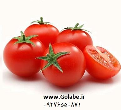 بذر گوجه نیوتن
