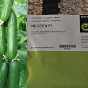 بذر اصلاح شده خیار گلخانه ای نگین