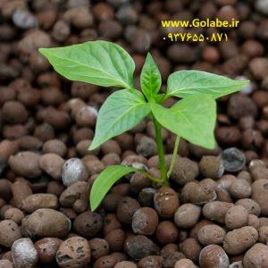خاک لیکا گلدان و باغچه