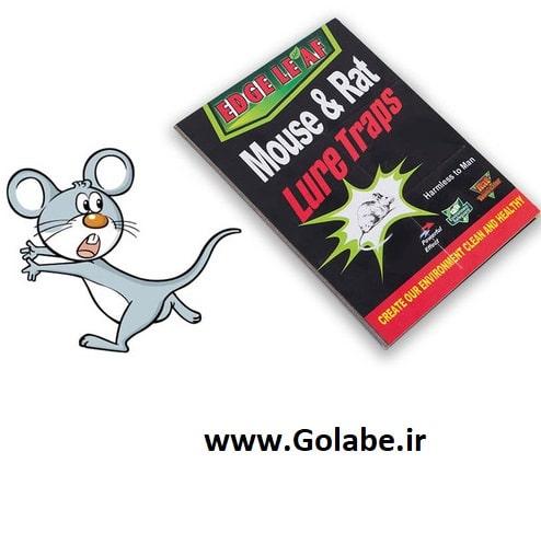 تله موش کتابی