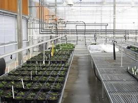 Nursery sprinkler irrigation