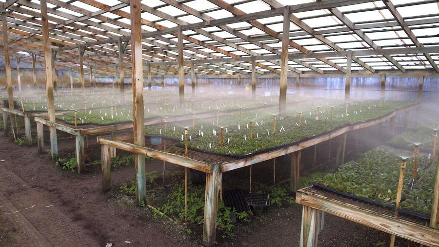 میکروآبپاش بارانی گلخانه