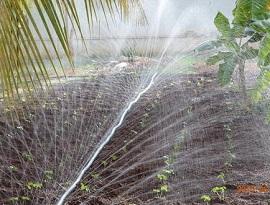 آموزش آبیاری بارانی توسط پیفلکس ( لوله بارانی )