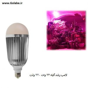 لامپ رشد گیاه گلابی